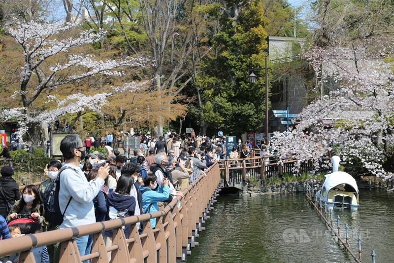 東京的井頭恩賜公園由東京都政府管理,約有500棵櫻花樹,是日本賞櫻百選之一。這幾日湧進大批賞櫻客。中央社記者楊明珠東京攝 110年3月28日