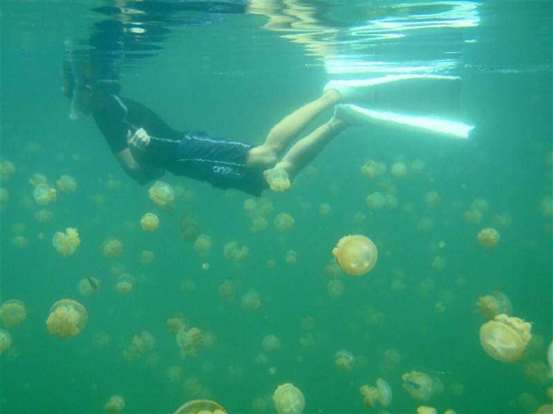 台帛旅遊泡泡旅客上限放寬,4月14日至9月30日參訪洛克群島、水母湖(圖),帛琉政府也將補助每名旅客25美元費用。(圖取自維基共享資源;作者tata_aka_T,CC BY 2.0)
