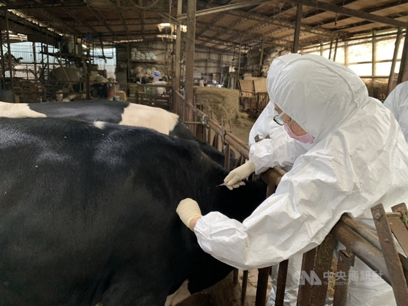 農委會18日表示,已完成全台牛結節疹疫情調查,未發現新增案例牛場;此外,苗栗以北縣市已在3天內完成轄內牛場牛隻疫苗注射。(中央社檔案照片)