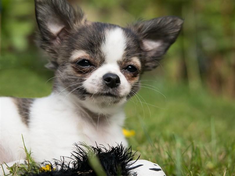 嘉義縣某國中舞蹈班,傳出教師罰遲到學生學狗叫,引發家長不滿。(示意圖/圖取自Pixabay圖庫)