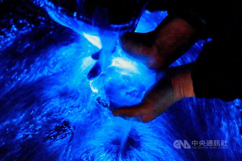金門地區藍眼淚今年大爆發,自3月起成功、尚義等海邊深夜總是聚滿追淚人潮,也吸引許多攝影工作者搶拍藍眼淚美景。(薛子軒提供)中央社記者黃慧敏傳真 110年4月23日