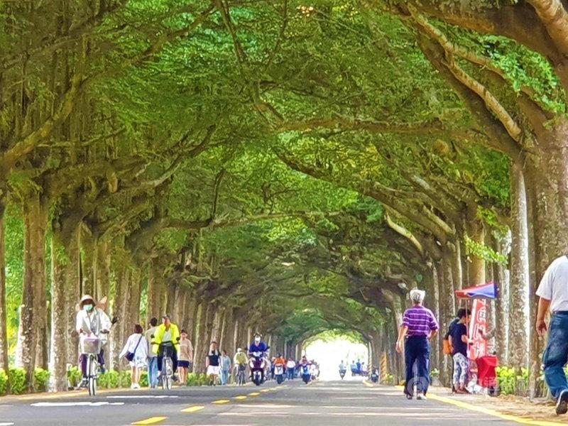 屏東潮州泗林綠色隧道綿延1.2公里長的小葉欖仁樹正值開花結果期,綠意盎然,不少民眾在林蔭下休閒散步及運動,也吸引許多遊客前往打卡。中央社記者郭芷瑄攝 110年4月24日