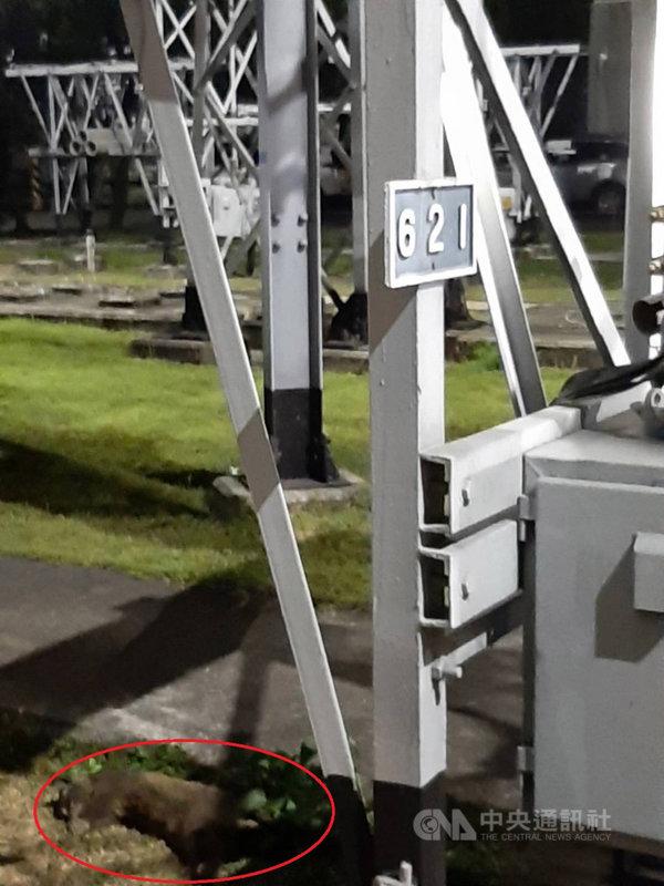 桃園市2日深夜大停電,範圍涵蓋逾6萬3588戶用戶。台電指出,經緊急搶修,3日凌晨1時21分恢復供電;停電原因是白鼻心侵入及觸碰變電所開關設備引起。(台電公司提供)中央社記者吳睿騏桃園傳真  110年5月3日