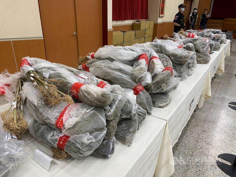 新竹市警察局破獲大麻工廠案,查扣大批大麻活株、大麻成品與香菸等,市值近新台幣5億元。中央社記者魯鋼駿攝 110年5月7日
