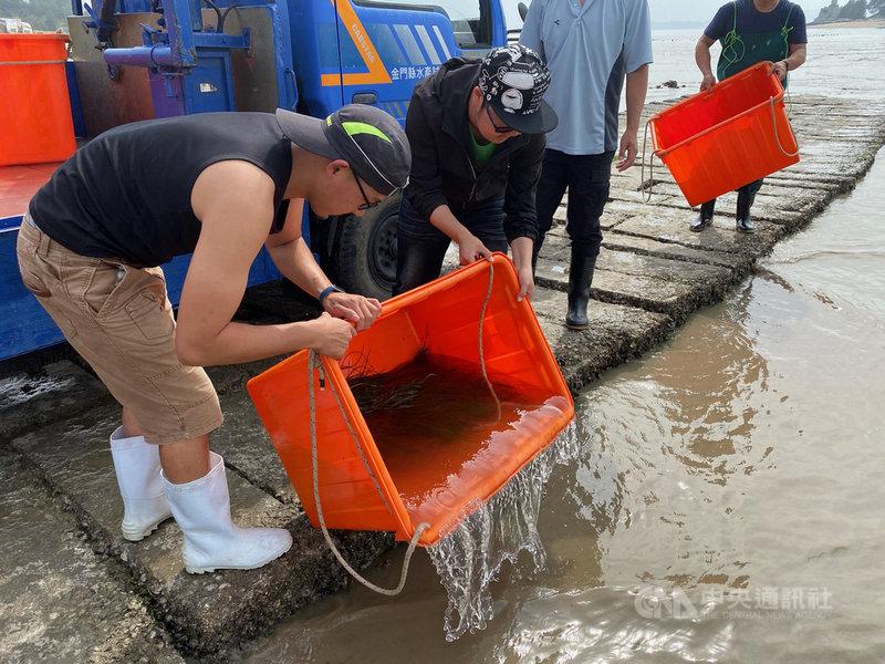 金門縣水產試驗所表示,遠海梭子蟹是金廈海域常見的蟹種,在漁獲市場需求量大,為了彌補自然生產力不足,加速恢復海域遠海梭子蟹族群資源復育,近幾年來開始放流自行育成遠海梭子蟹苗。(金門縣水試所提供)中央社記者黃慧敏傳真 110年5月7日