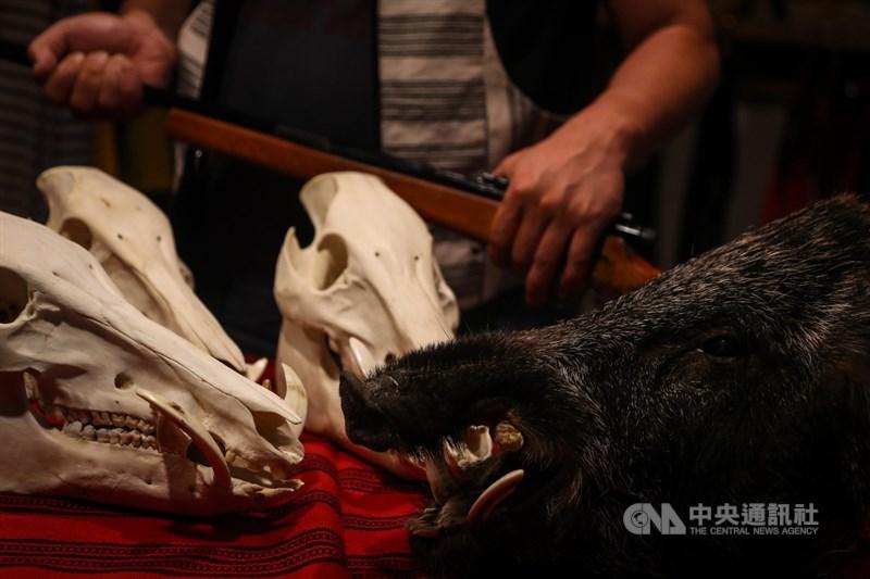 原住民持獵槍和與文化有關狩獵行為已除罪化,布農族獵人王光祿撿拾槍狩獵遭判刑,大法官7日宣示解釋,槍砲彈藥刀械許可及管理辦法、原住民族基於傳統文化及祭儀需要獵捕宰殺利用野生動物管理辦法部分違憲。圖為泰雅族獵人的自製獵槍與山豬獸骨。中央社記者王騰毅攝 110年5月7日