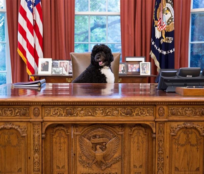 美國前總統歐巴馬表示家中愛犬「阿博」(Bo)8日不敵癌症病逝。(圖取自instagram.com/michelleobama)