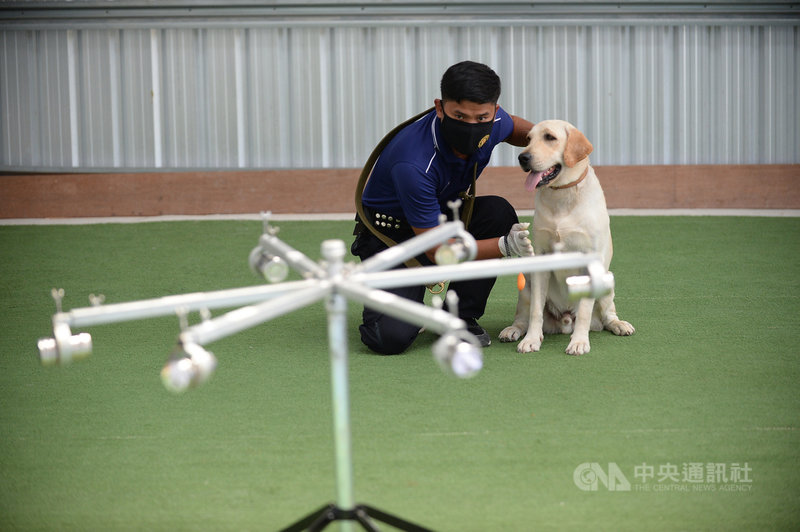 泰國朱拉隆功大學和石油公司泰國雪佛龍合作,訓練緝毒犬透過人體的汗液味道分辨人類是否罹患武漢肺炎,圖為訓練人員對犬隻下達指令。(泰國雪佛龍提供)中央社記者呂欣憓曼谷傳真 110年5月9日