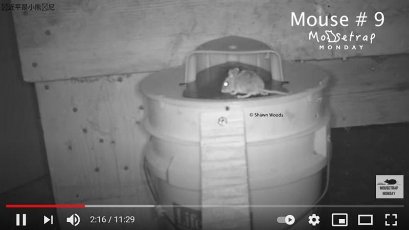 美國網紅伍茲最近在YouTube上傳影片,批評中國盜用他的捕鼠器開箱實測影片,他在影片左上角附浮水印,譏諷中國國家主席習近平是小熊維尼,顯然是為了抗議並防止影片被盜。(圖取自Shawn Woods YouTube頻道youtube.com)