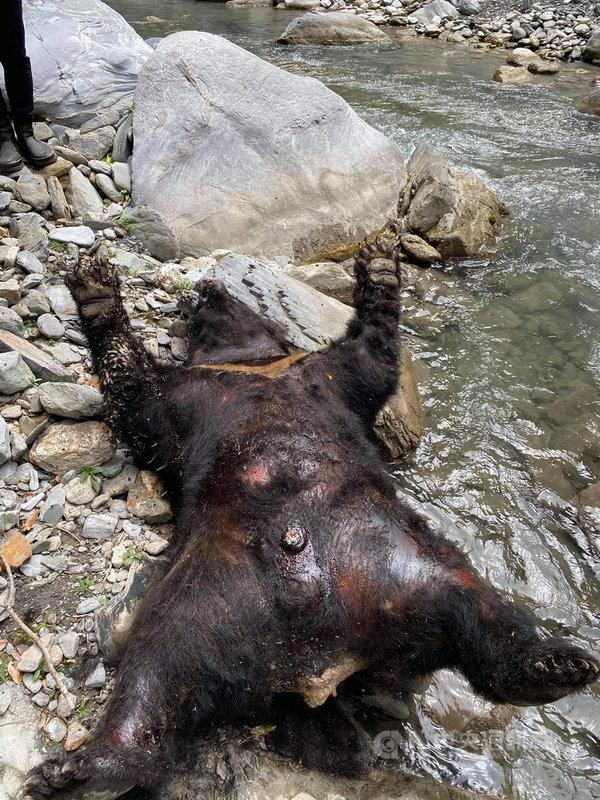 花蓮林管處接獲民眾通報在卓溪鄉拉庫拉庫溪上游一處溪谷發現一頭台灣黑熊仰臥溪邊,屍體已發臭,12日上午已派人上山,徒步要花3天時間,預計15日才能接觸到黑熊,再由獸醫檢查,了解死亡原因。(民眾提供)中央社記者李先鳳傳真  110年5月12日