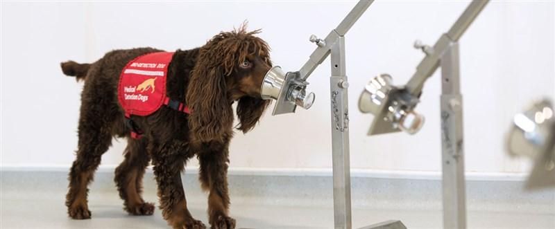 英國倫敦大學研究指出,即使患者無症狀,狗狗也能經訓練偵測出逾90%的2019冠狀病毒疾病(COVID-19)患者。(圖取自倫敦大學衛生暨熱帶醫學院網頁lshtm.ac.uk)