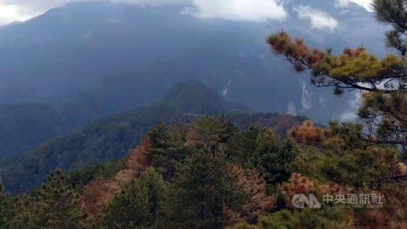 玉山八通關杜鵑營地(玉山事業區第52林班)一帶16日發生森林火災,經森林護管員地面滅火、直升機持續投水,26日下午6時確認火場未再冒煙。(嘉義林管處提供)中央社記者蔡智明傳真 110年5月26日