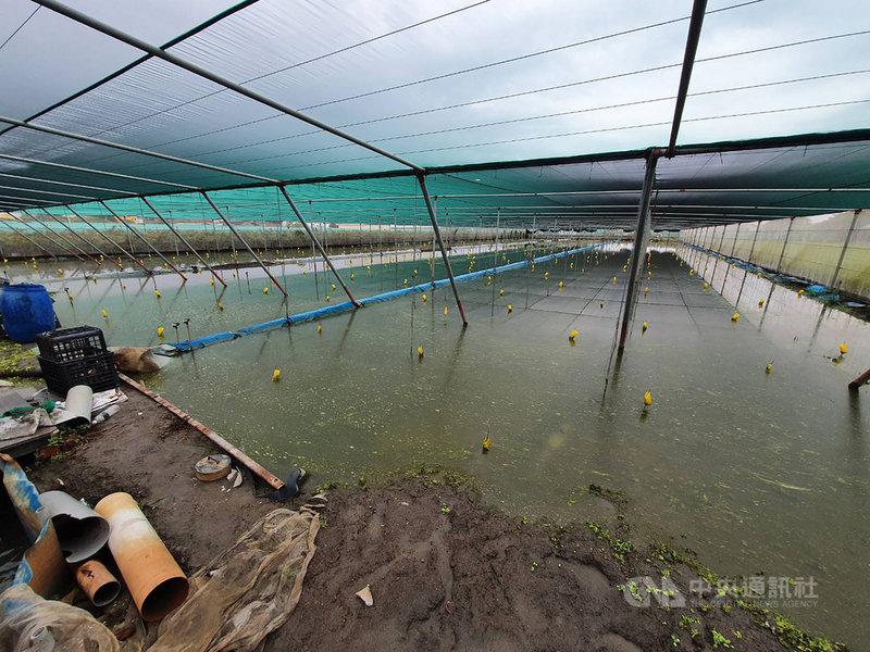 梅雨鋒面帶來豐沛雨量,但雲林縣有蔬菜田泡水受災,縣長張麗善6日表示,蔬菜生產區西螺和二崙等地區短期葉菜預估損害約2成,但日後放晴影響情況恐會加劇,已密切注意中。(雲林縣政府提供)中央社記者姜宜菁傳真  110年6月6日