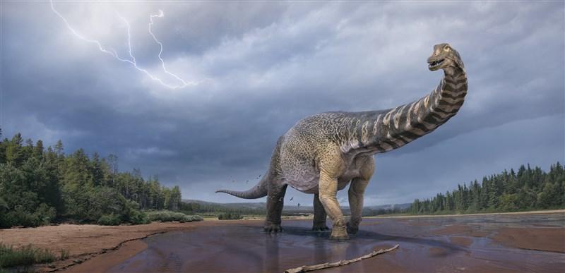 古生物學家表示,在澳洲內陸發現的南方泰坦巨龍已被認定為新物種,是地球上體型最大的恐龍之一。(圖取自facebook.com/EromangaNaturalHistoryMuseum)
