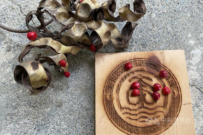 台南山上花園水道博物館利用因疫情封園期間盤點園區樹種,在密林區的相思豆樹下發現一顆顆鮮紅色的小愛心。(台南市文化局提供)中央社記者楊思瑞台南傳真 110年6月13日