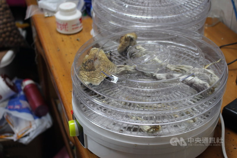 高雄市陳姓男子在網路上學習種植二級毒品迷幻蘑菇的方法,從國外購入栽種用的「孢子印」,自行以培養皿等相關設備栽種、製造、烘乾。(警方提供)中央社記者蘇木春傳真 110年6月18日