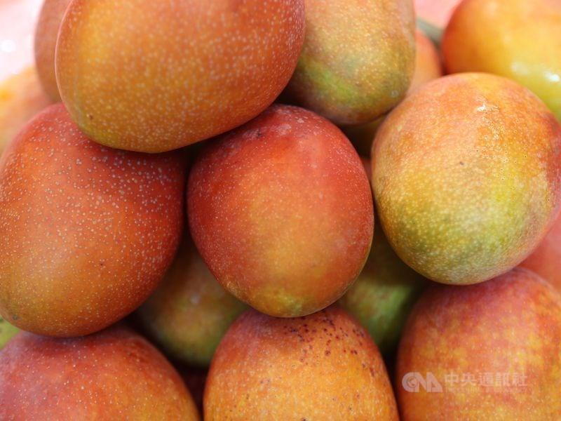 一批從台灣運抵紐西蘭的芒果和荔枝中發現東方果實蠅幼蟲,紐西蘭當局下令暫停台灣芒果和荔枝入境。(示意圖/中央社檔案照片)
