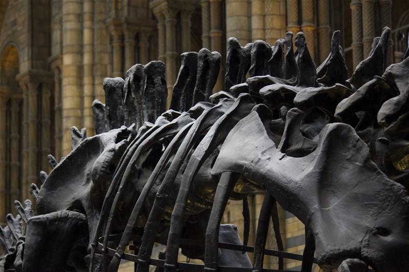 最新研究發現,恐龍物種大約在7600萬年前開始衰退,這與約7500萬年前的彗星撞地球事件相距1000萬年。(示意圖/圖取自Pexels圖庫)