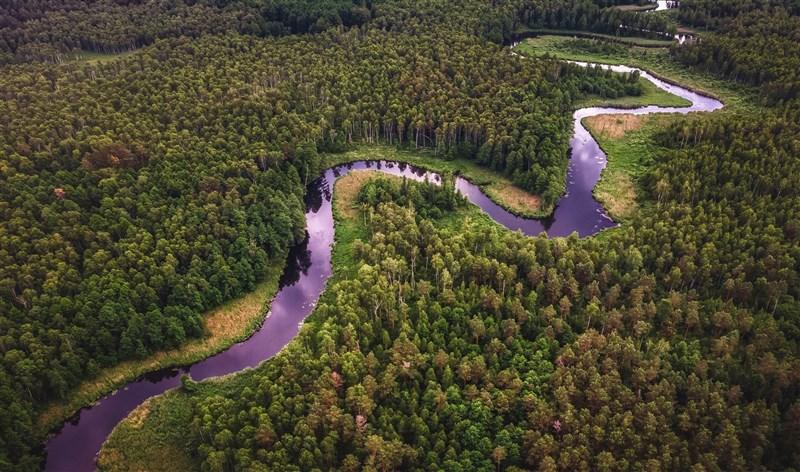 根據亞馬遜科學委員會發表的報告,亞馬遜雨林35%遭砍伐或惡化,受到嚴重破壞,導致1萬多種動植物物種面臨高度滅絕風險。(示意圖/圖取自Unsplash圖庫)