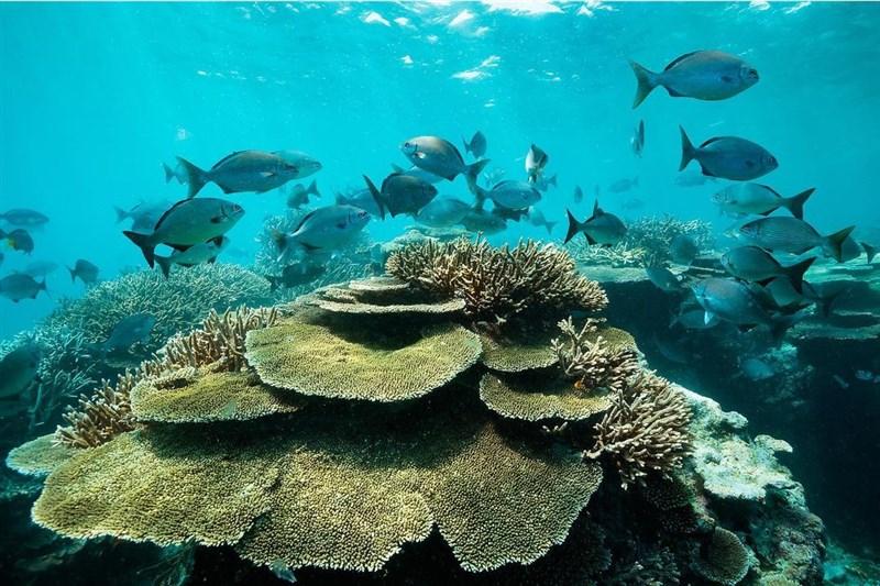 由於氣候變遷造成珊瑚破壞,聯合國教科文組織6月建議將澳洲大堡礁生態體系列入「瀕危名單」。(圖取自facebook.com/GreatBarrierReefMarinePark)