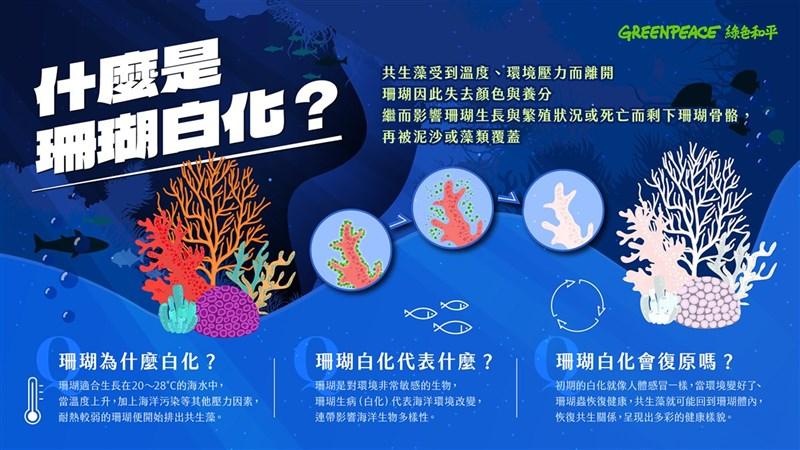 綠色和平20日表示,氣候變遷,2020年沒颱風擾動,持續升溫引發台灣近海珊瑚最大白化危機,4月時並已測到水溫過高,南台灣近海珊瑚危機恐再現。(綠色和平提供)中央社記者楊淑閔傳真 110年7月20日
