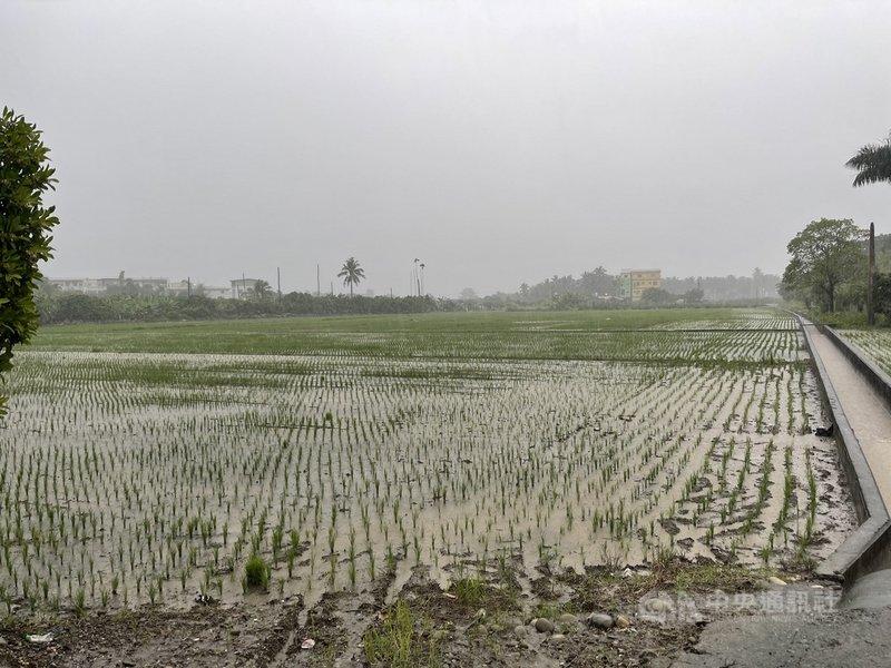 颱風烟花即將來襲,高雄市政府農業局提醒農民做好田間排水,並注意採收安全。(高雄市農業局提供)中央社記者蔡孟妤傳真 110年7月21日