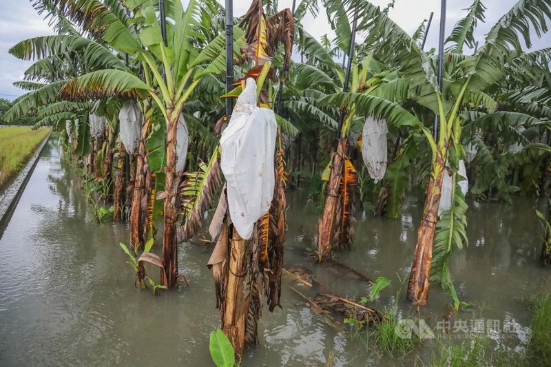 受西南氣流影響連日豪大雨,屏東許多農作物泡水損傷。(周春米服務處提供)中央社記者郭芷瑄傳真  110年8月3日