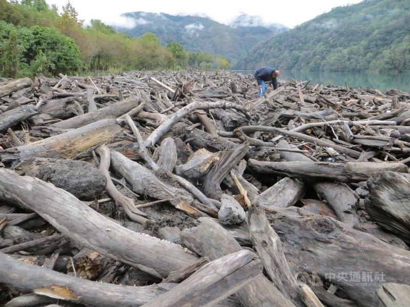 颱風帶來的瞬間雨量,易造成山林土石崩塌,林木遭沖刷進河川、水庫、海岸等,成為漂流木,南投林管處指出,漂流木是國有財產,未經公告,民眾不得私自撿拾。圖為漂流木資料照。(南投林管處提供)中央社記者蕭博陽南投縣傳真  110年8月6日