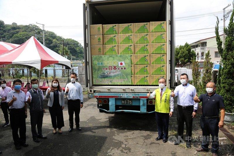 台灣文旦品質優良,成功打開日本市場,首批文旦13日裝櫃,農糧署表示,預計輸日50公噸以上,將在日本連鎖超市上架販售。(農糧署提供)中央社記者郝雪卿傳真  110年9月13日