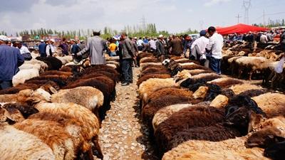 位於荒地鄉的牛羊大巴扎,是喀什最有特色的巴扎之一。