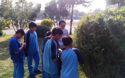 大葉大學生資系學生帶領秀水國小學童觀察校園植物