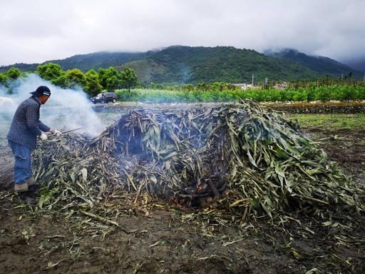 嚴防秋行軍蟲來襲 農民檢具文件申請焚燒許可 否則仍將開罰