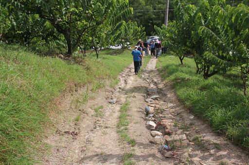 農民陳情農路改善 饒縣長視察指示農業處協助 維護出入安全及農產品運輸便利