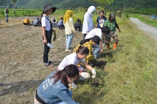 學生體驗栽種布農傳統作物