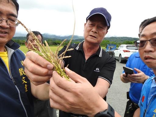 縣府實勘台東縱谷米倉 發現一期稻作空包彈情況嚴重