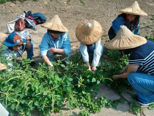 室設系林佳慧老師帶領室設系學生動手做,實際參與拔草、種樹,整理環境。