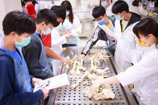人骨排列觀察的實驗讓高中生們難忘。(義守大學提供)