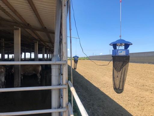 嘉義縣1天半完成全縣牛場疫調,牛隻健康狀況正常