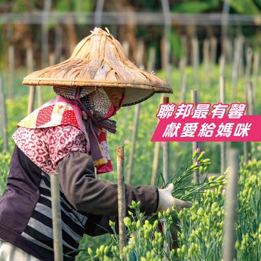 聯邦銀行於母親節前夕持續認購田尾鄉4萬株康乃馨花束,以實際行動支持在地農民。