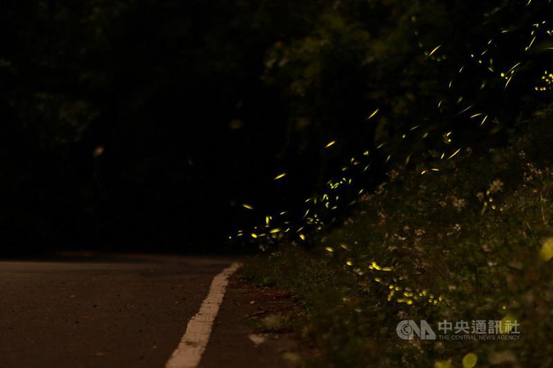 奧萬大國家森林遊樂區擁有乾淨水源及多樣森林植被,每年4、5月夜間可見大量螢火蟲飛舞林間,奧萬大自然教育中心也配合推出賞螢季活動,歡迎民眾報名。(資料照片,南投林管處提供)中央社記者蕭博陽南投縣傳真