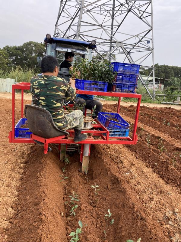 茶改場開發附掛式植茶機 提高種茶效率
