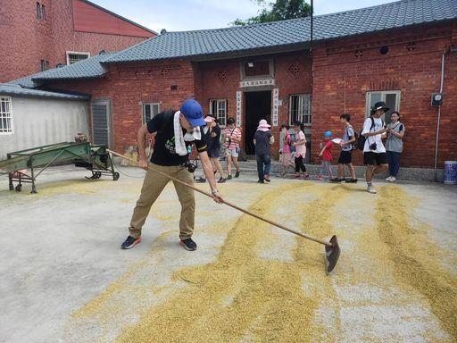 淡水忠山社區割稻體驗活動。