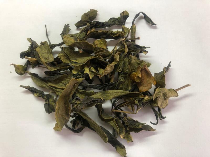 循環農業新價值  茶改場讓茶渣變黑金
