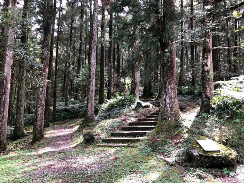 漫步桃園東眼山國家森林遊樂區整齊美麗的柳杉林,呼吸芬多精,展開最舒心的森林浴之旅