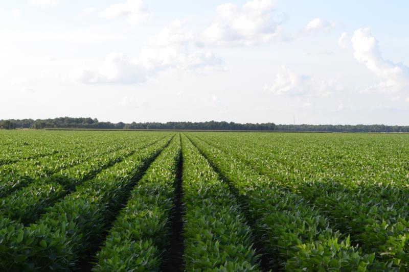 善用無人機   永續農業發展不是夢
