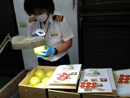 台灣文旦睽違20年成功銷往日本 首批1萬1028公斤