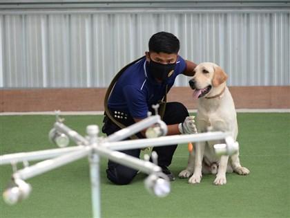 輔助篩檢流程 泰國訓練緝毒犬聞出肺炎患者
